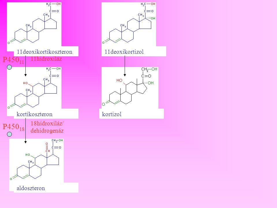 P45011 P45018 11deoxikortikoszteron 11deoxikortizol 11hidroxiláz