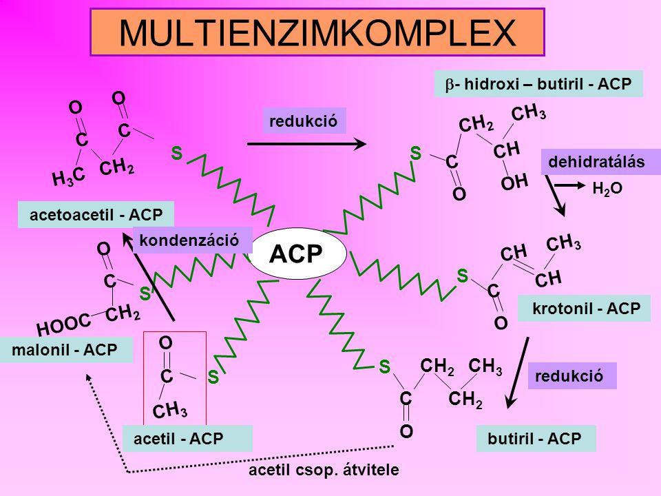 - hidroxi – butiril - ACP