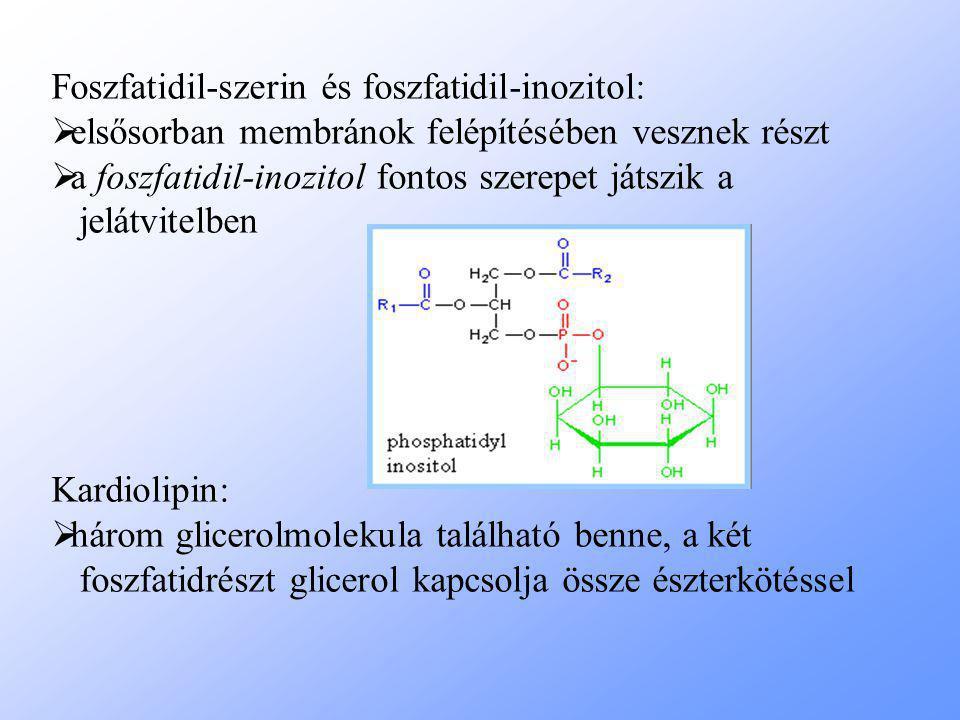 Foszfatidil-szerin és foszfatidil-inozitol: