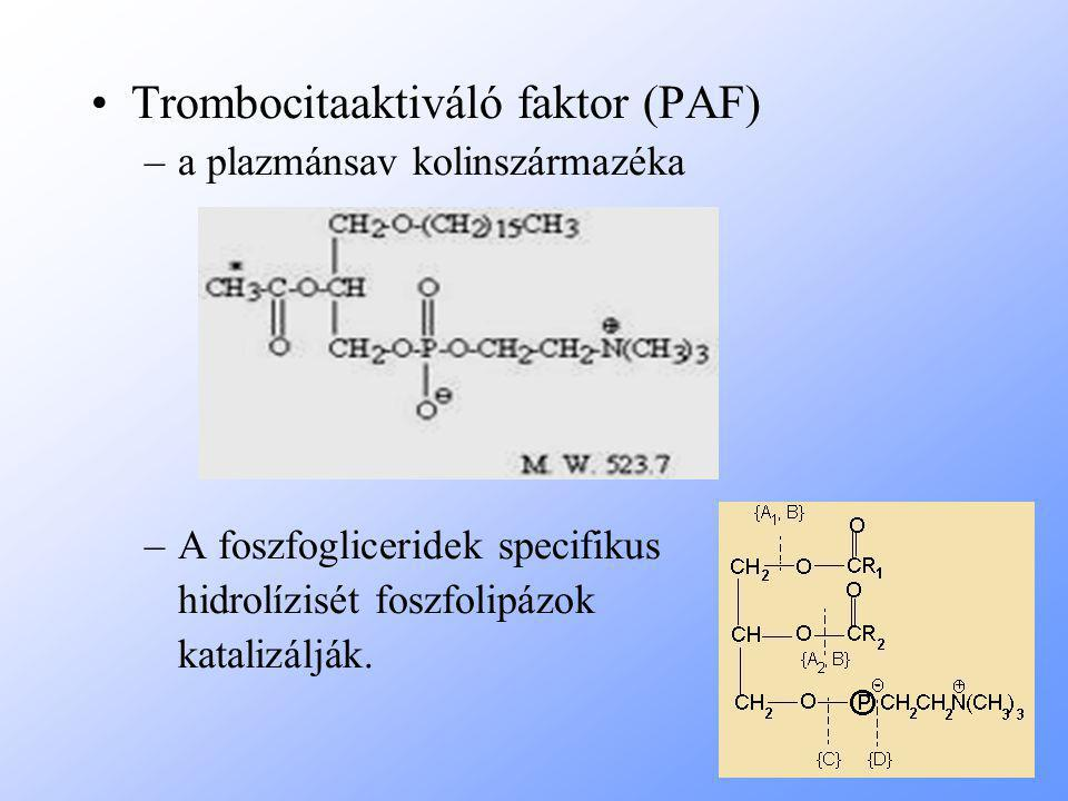 Trombocitaaktiváló faktor (PAF)