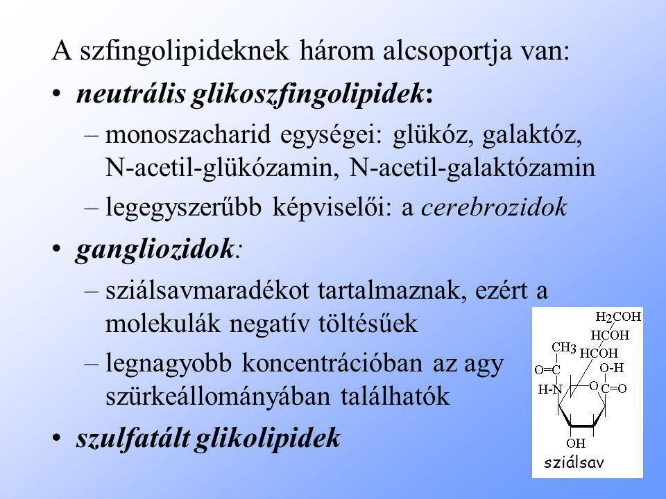 A szfingolipideknek három alcsoportja van: