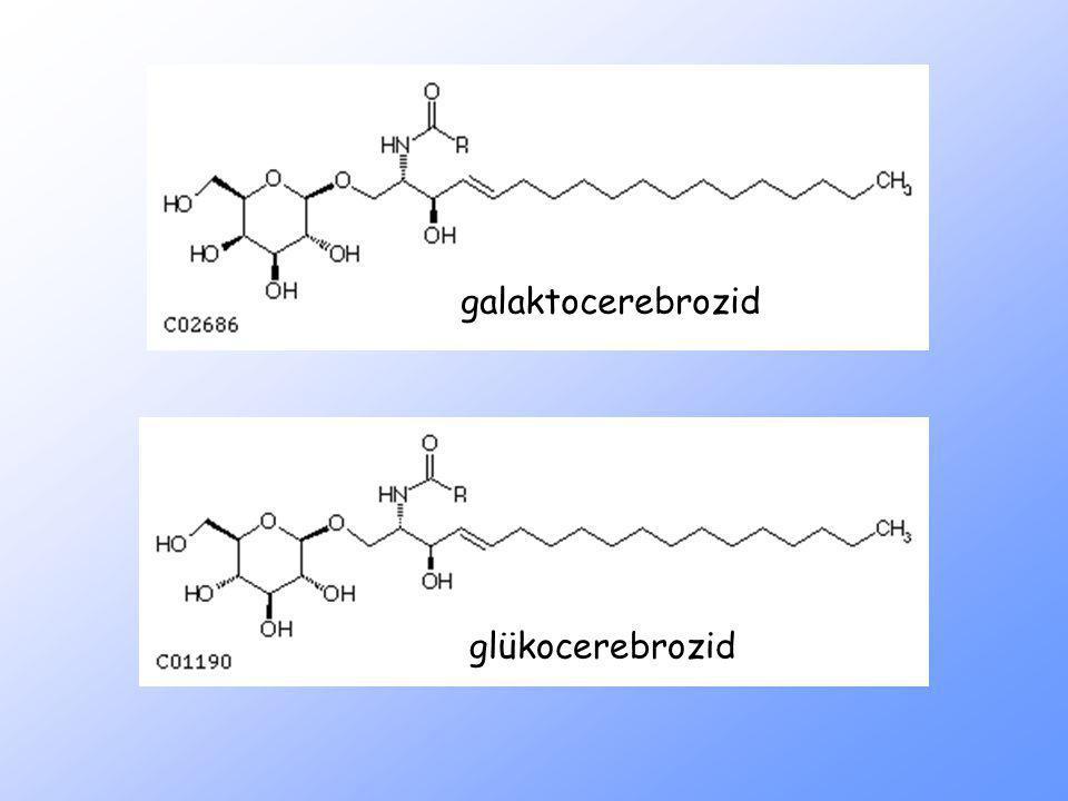 galaktocerebrozid glükocerebrozid