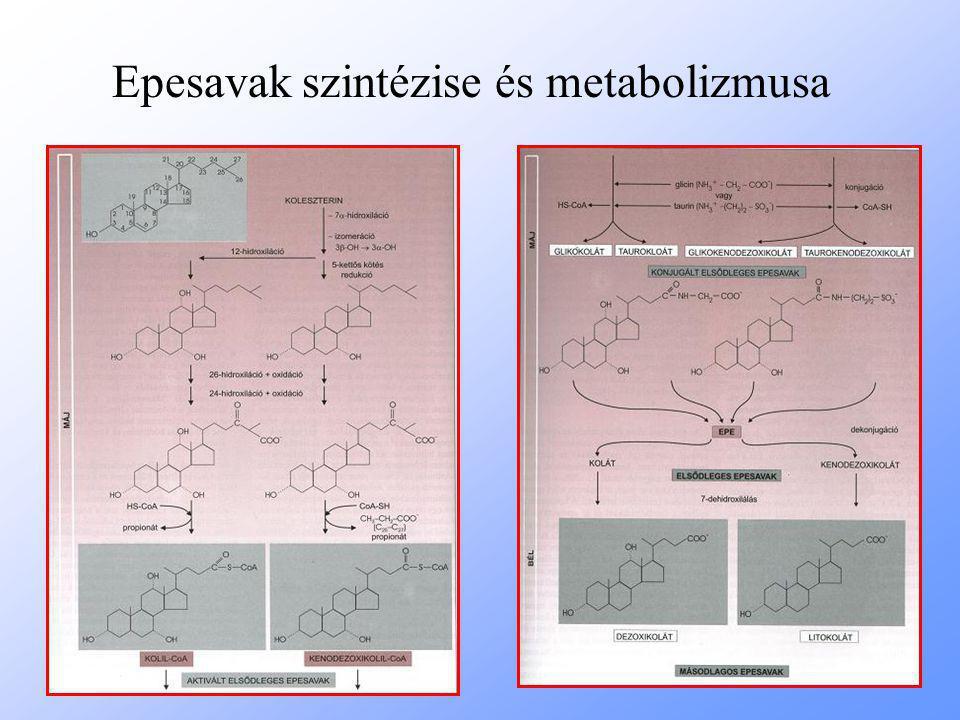 Epesavak szintézise és metabolizmusa