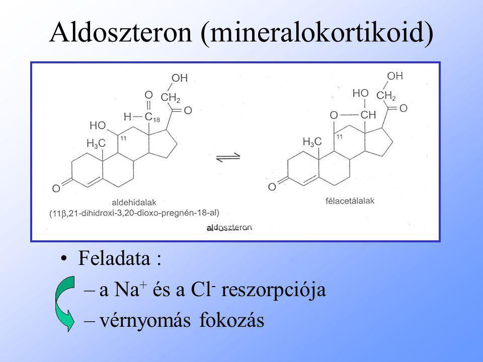 Aldoszteron (mineralokortikoid)