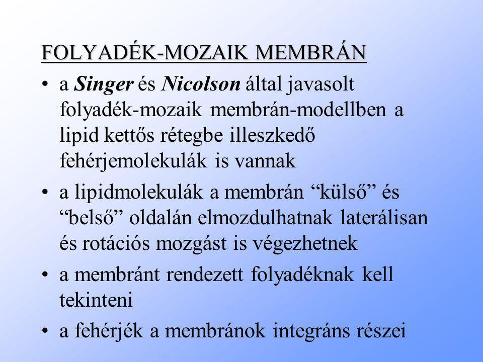 FOLYADÉK-MOZAIK MEMBRÁN