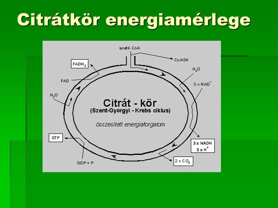 Citrátkör energiamérlege