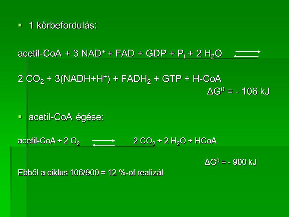 acetil-CoA + 3 NAD+ + FAD + GDP + Pi + 2 H2O