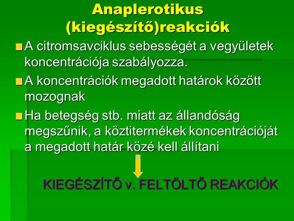 Anaplerotikus (kiegészítő)reakciók