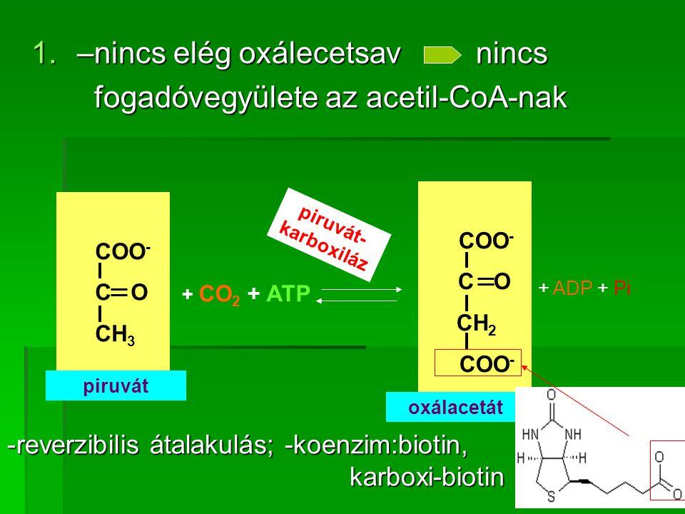 –nincs elég oxálecetsav nincs fogadóvegyülete az acetil-CoA-nak