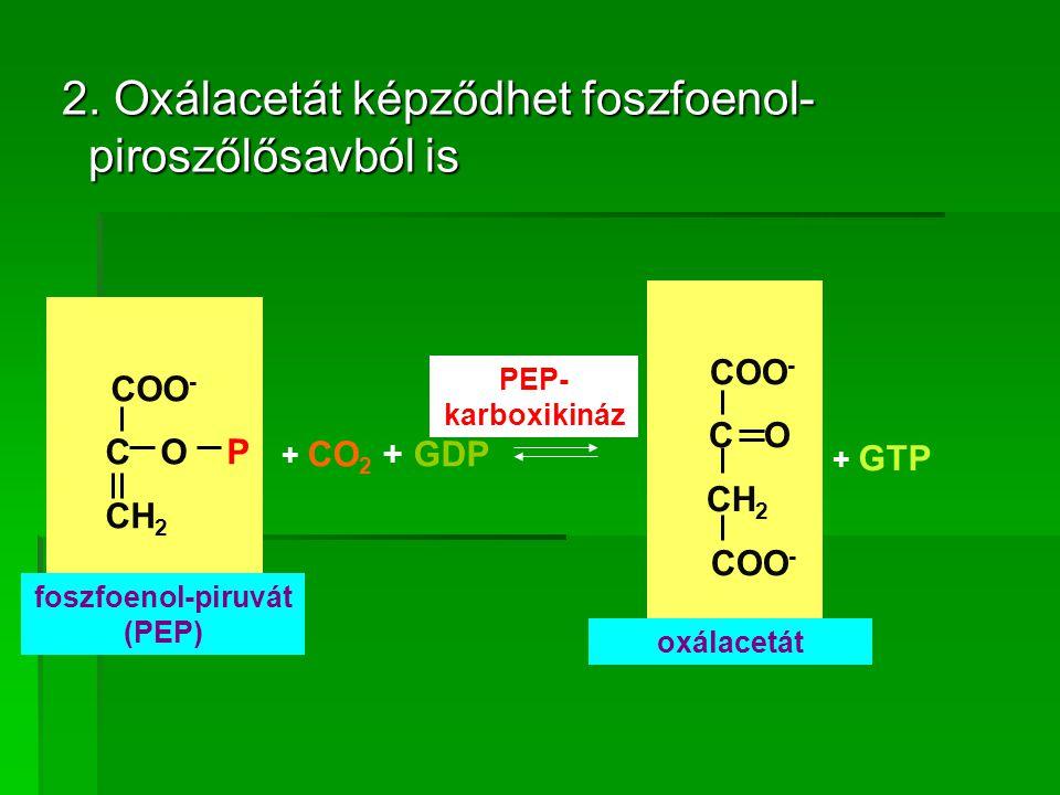 foszfoenol-piruvát (PEP)