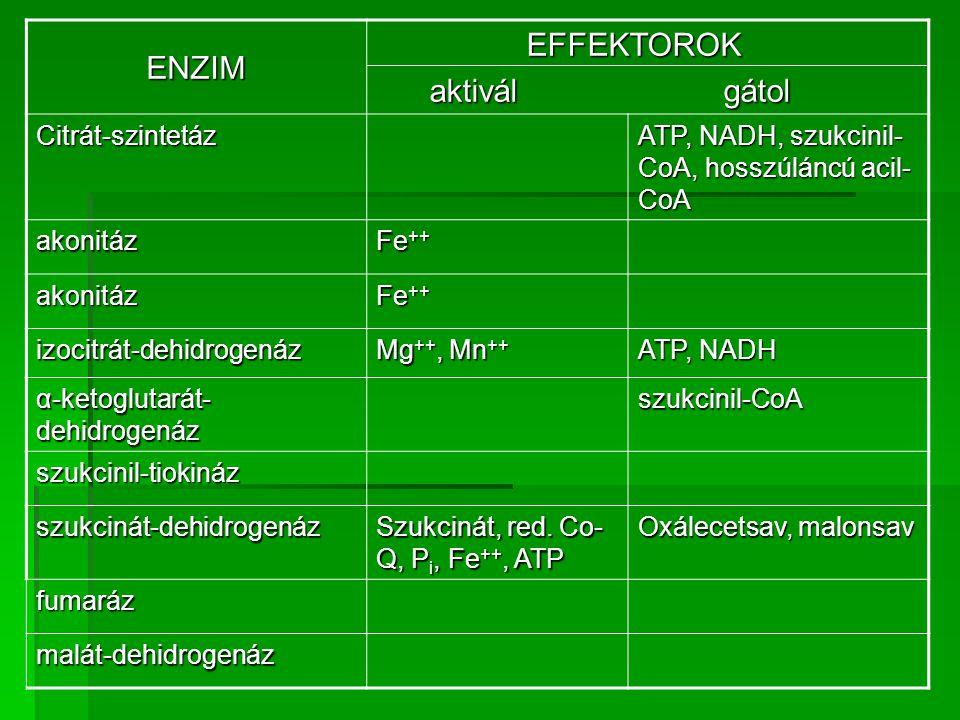 ENZIM EFFEKTOROK aktivál gátol Citrát-szintetáz