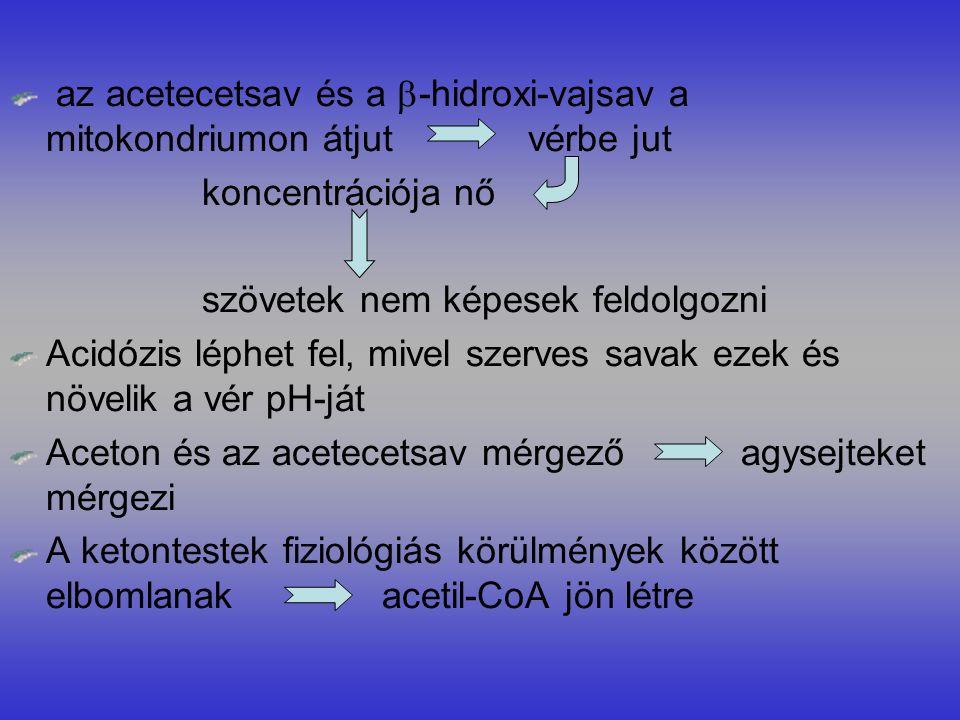 az acetecetsav és a -hidroxi-vajsav a mitokondriumon átjut vérbe jut