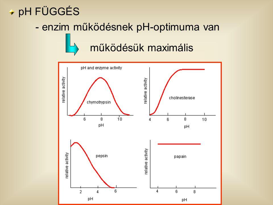 pH FÜGGÉS - enzim működésnek pH-optimuma van működésük maximális