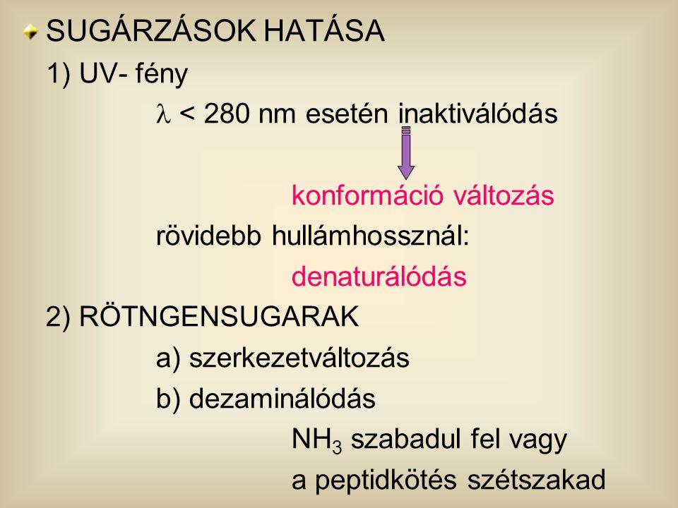 SUGÁRZÁSOK HATÁSA 1) UV- fény  < 280 nm esetén inaktiválódás