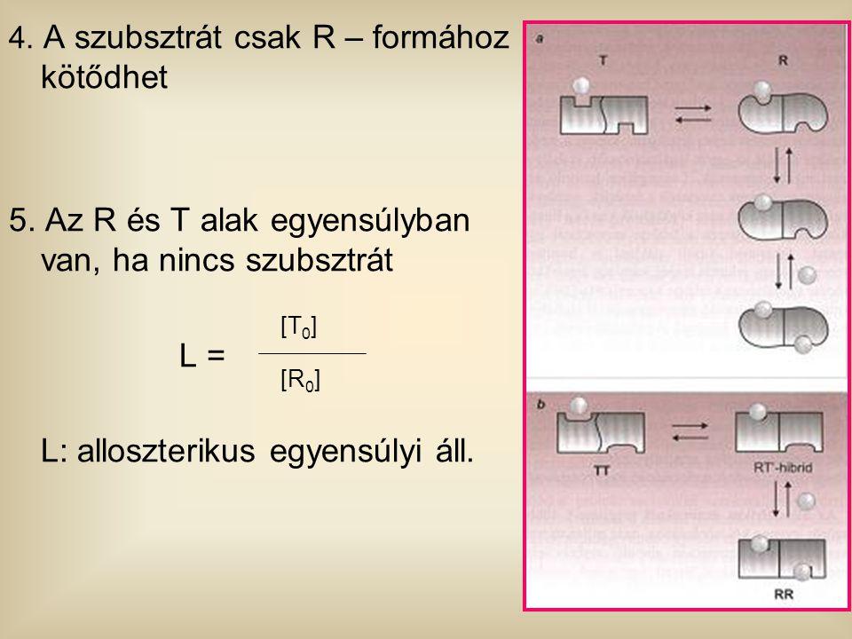 5. Az R és T alak egyensúlyban van, ha nincs szubsztrát