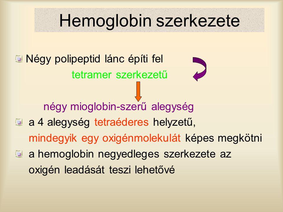 Hemoglobin szerkezete