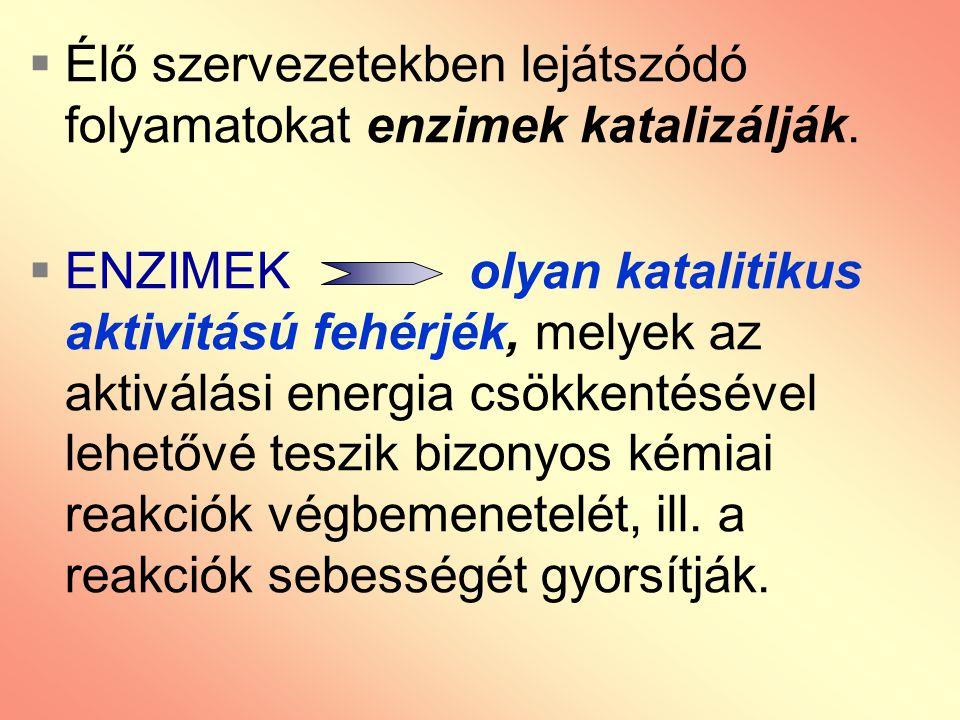 Élő szervezetekben lejátszódó folyamatokat enzimek katalizálják.