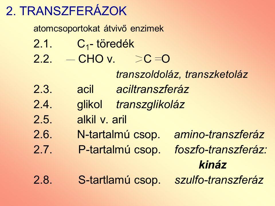 atomcsoportokat átvivő enzimek 2.1. C1- töredék