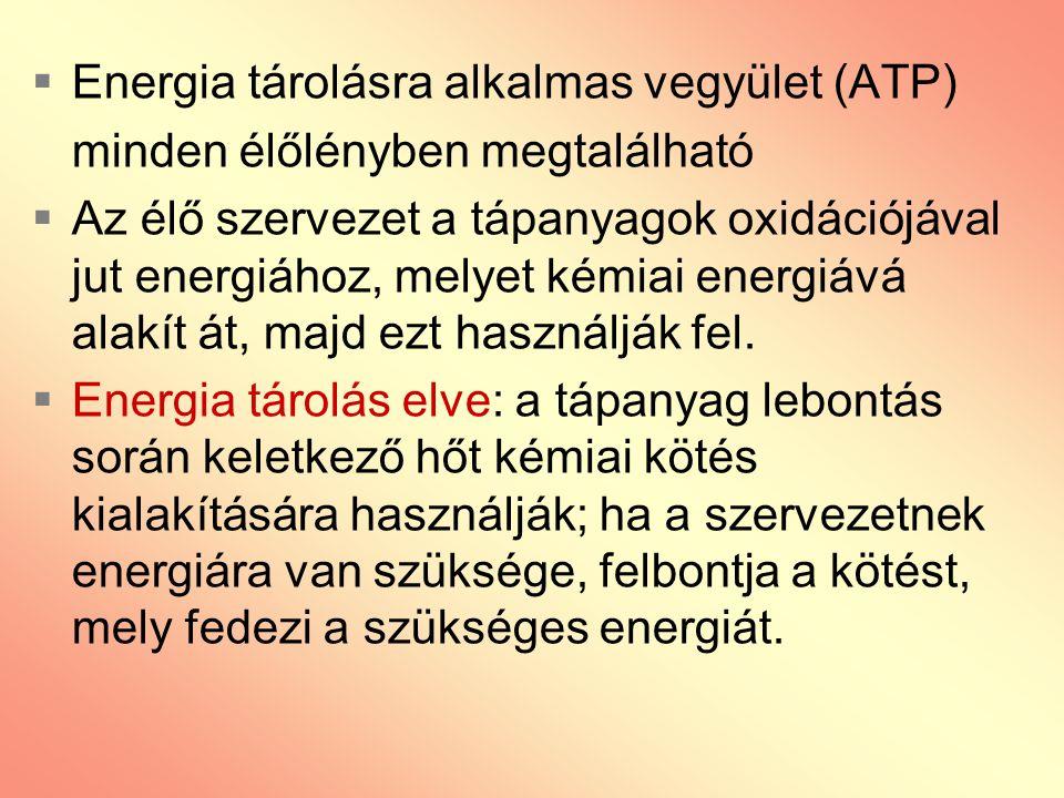 Energia tárolásra alkalmas vegyület (ATP)
