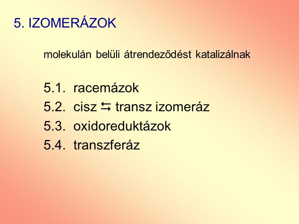5. IZOMERÁZOK 5.2. cisz  transz izomeráz 5.3. oxidoreduktázok