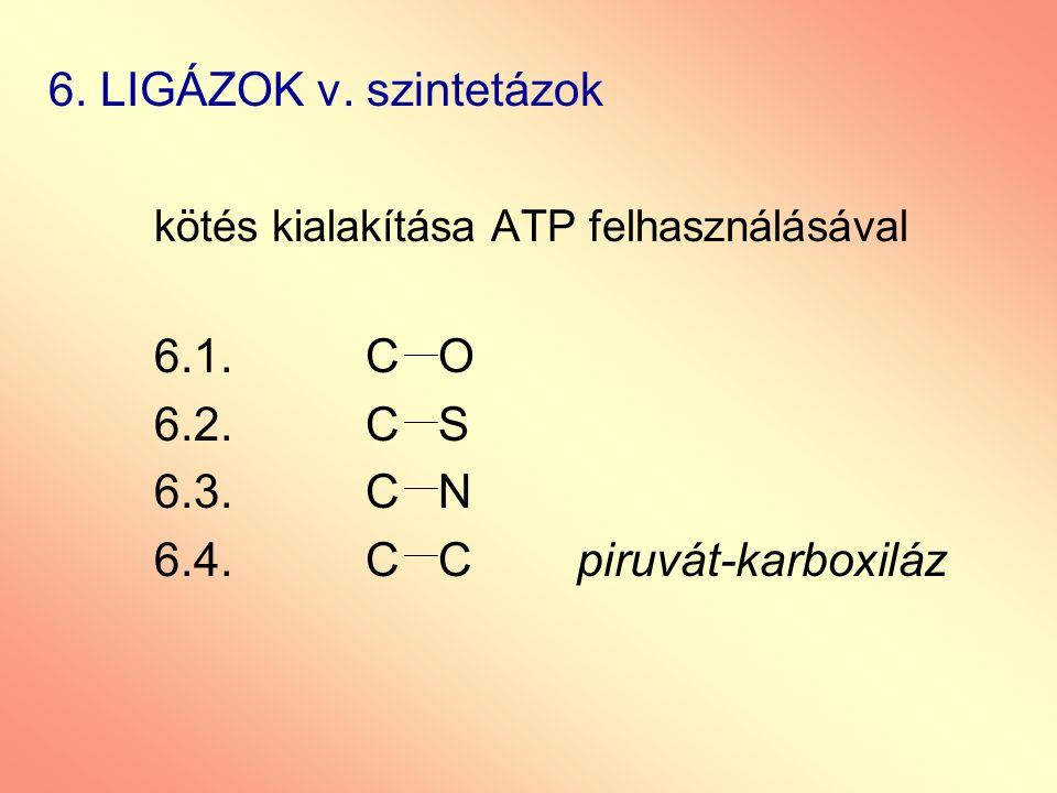 6. LIGÁZOK v. szintetázok kötés kialakítása ATP felhasználásával. 6.1. C O. 6.2. C S. 6.3. C N.
