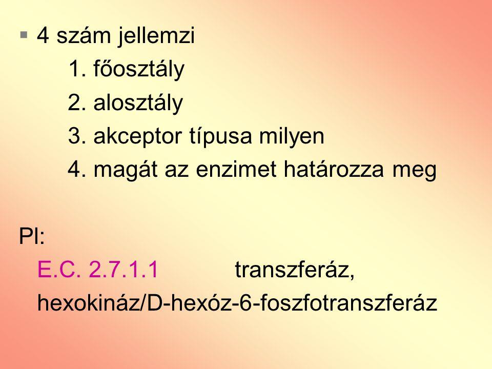 4 szám jellemzi 1. főosztály. 2. alosztály. 3. akceptor típusa milyen. 4. magát az enzimet határozza meg.