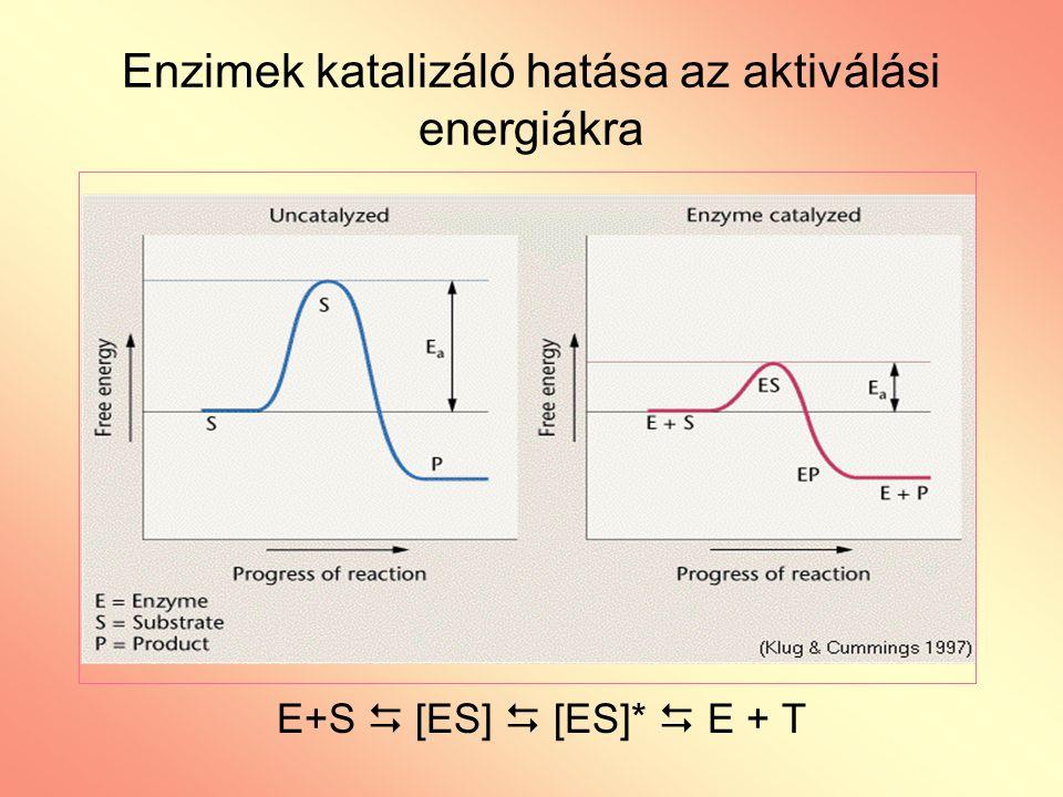 Enzimek katalizáló hatása az aktiválási energiákra