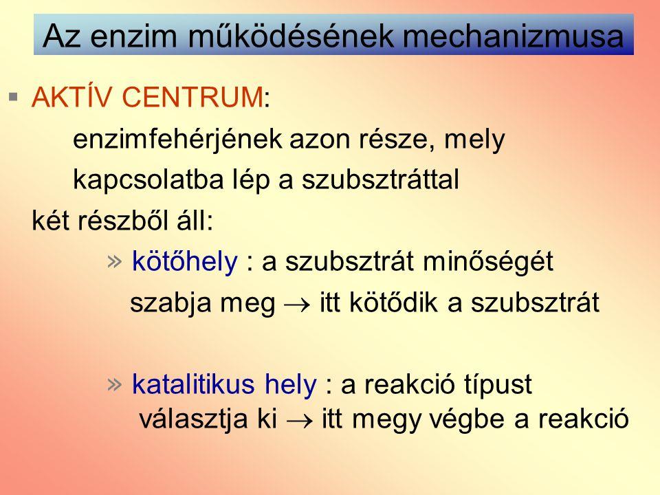 Az enzim működésének mechanizmusa