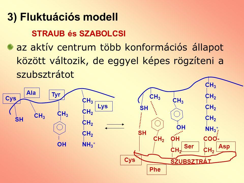 3) Fluktuációs modell STRAUB és SZABOLCSI