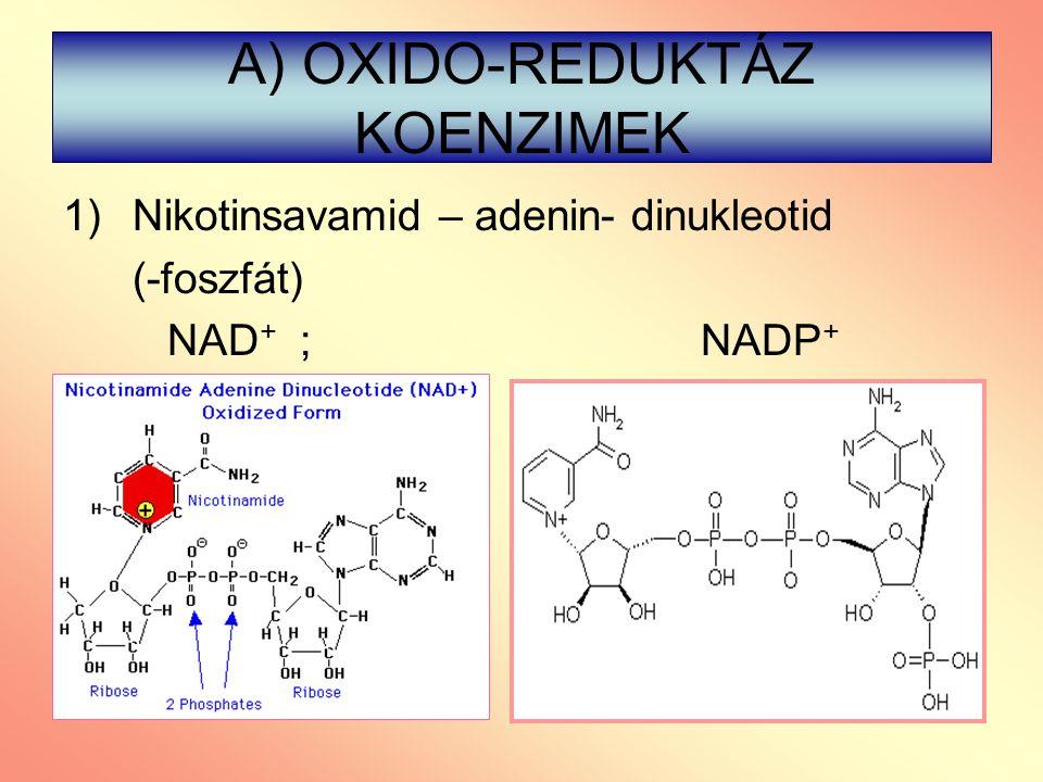 A) OXIDO-REDUKTÁZ KOENZIMEK