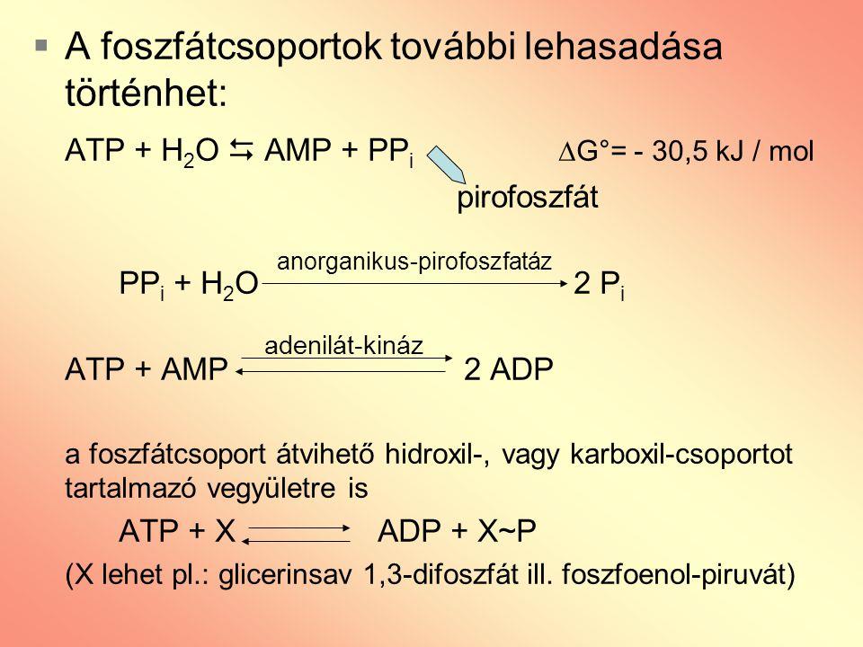 A foszfátcsoportok további lehasadása történhet: