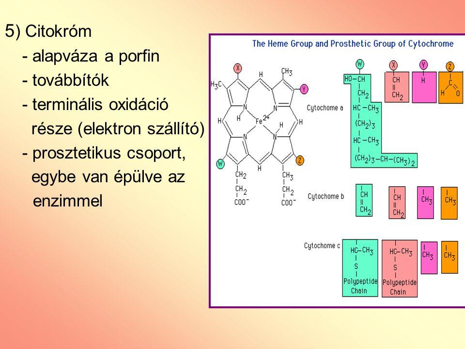 5) Citokróm - alapváza a porfin - továbbítók - terminális oxidáció