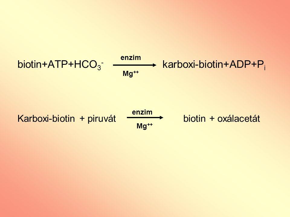 biotin+ATP+HCO3- karboxi-biotin+ADP+Pi