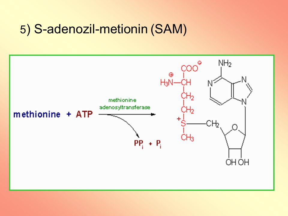 5) S-adenozil-metionin (SAM)