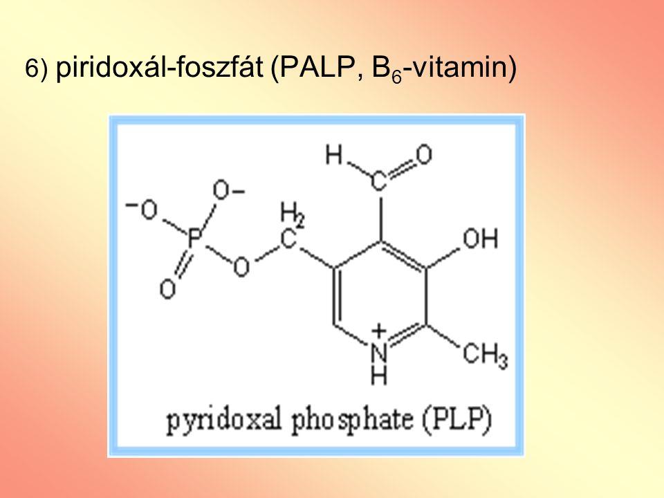 6) piridoxál-foszfát (PALP, B6-vitamin)