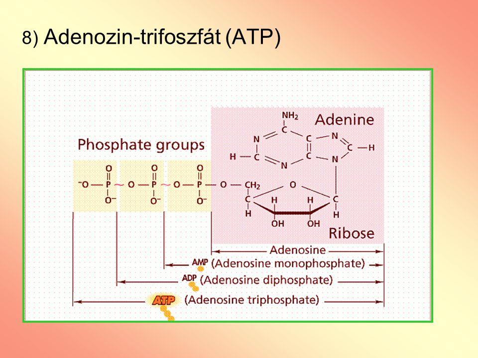 8) Adenozin-trifoszfát (ATP)