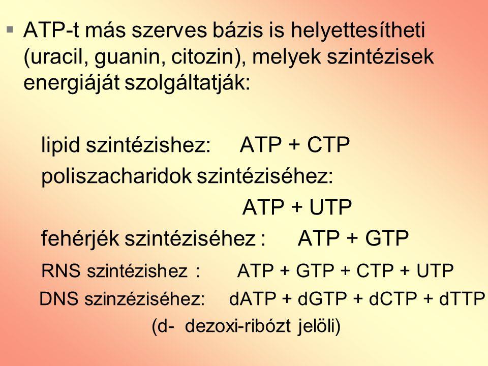 lipid szintézishez: ATP + CTP poliszacharidok szintéziséhez: ATP + UTP