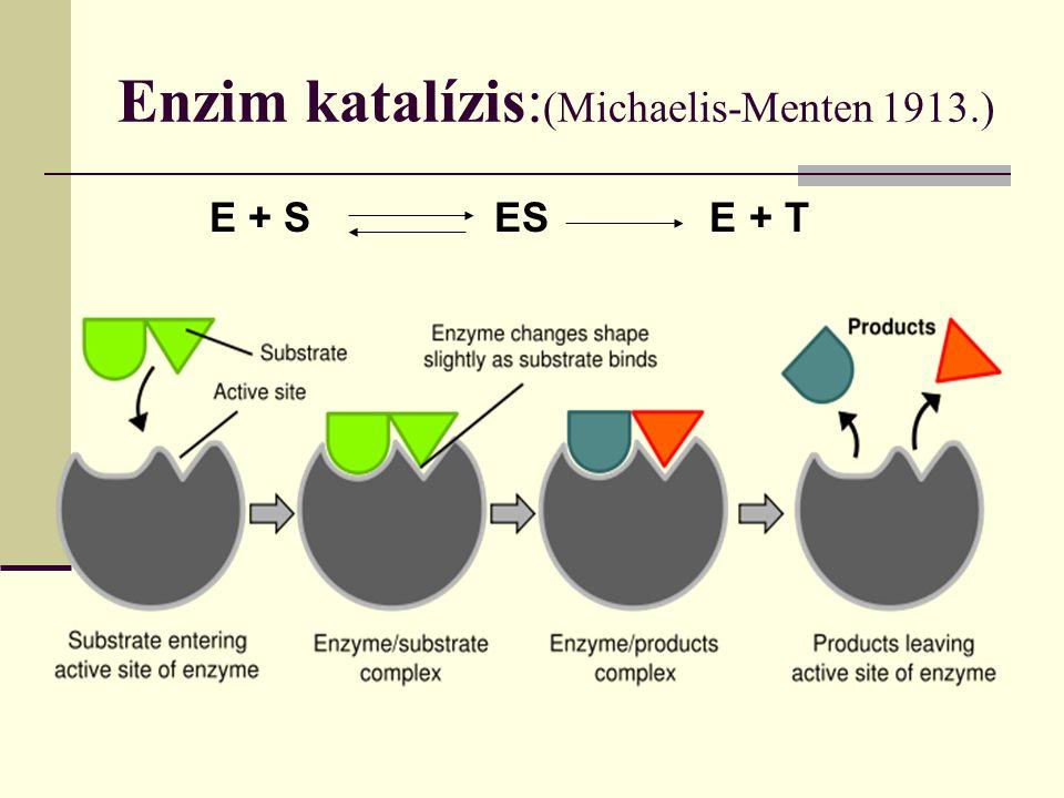 Enzim katalízis:(Michaelis-Menten 1913.)