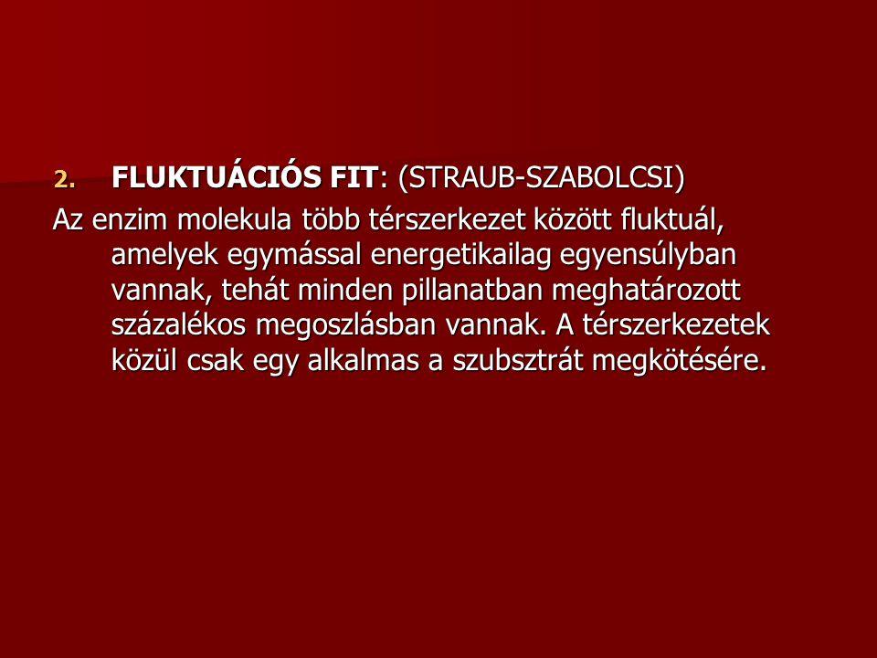 FLUKTUÁCIÓS FIT: (STRAUB-SZABOLCSI)