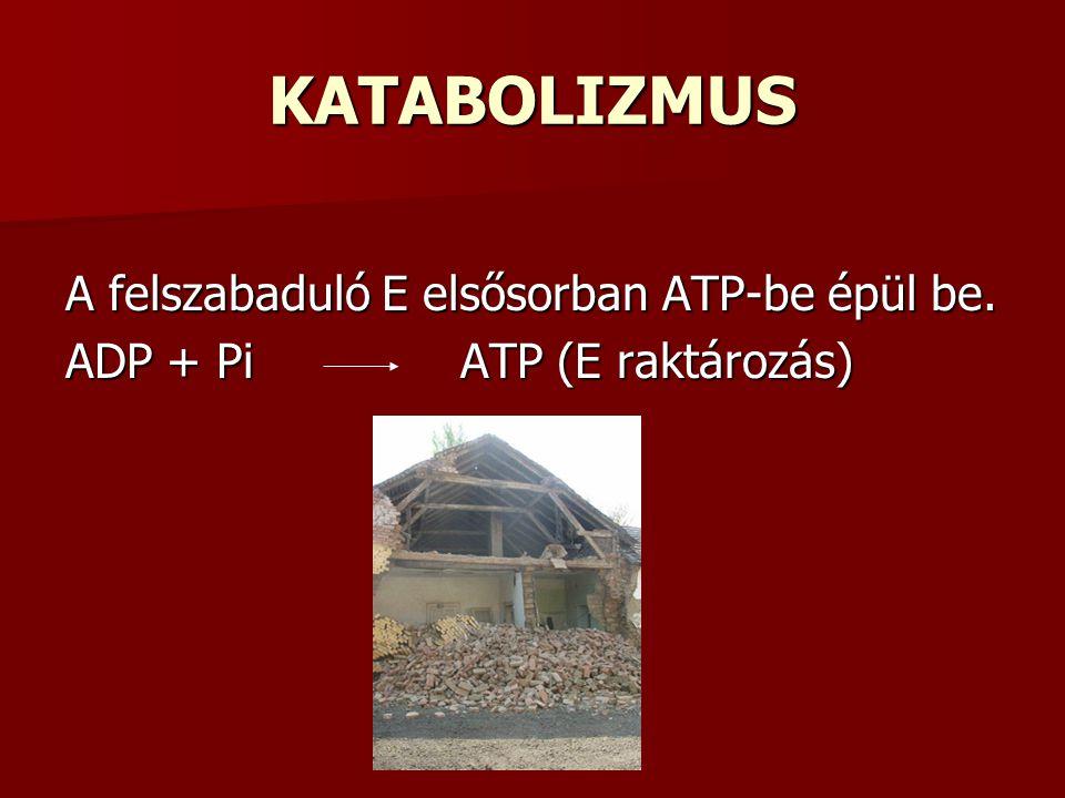 KATABOLIZMUS A felszabaduló E elsősorban ATP-be épül be.