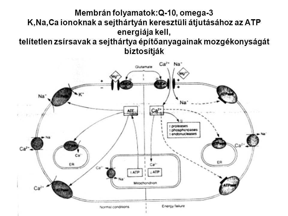 Membrán folyamatok:Q-10, omega-3 K,Na,Ca ionoknak a sejthártyán keresztüli átjutásához az ATP energiája kell, telítetlen zsírsavak a sejthártya építőanyagainak mozgékonyságát biztosítják