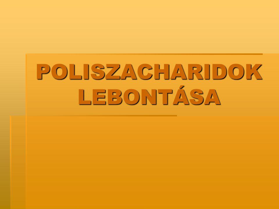 POLISZACHARIDOK LEBONTÁSA