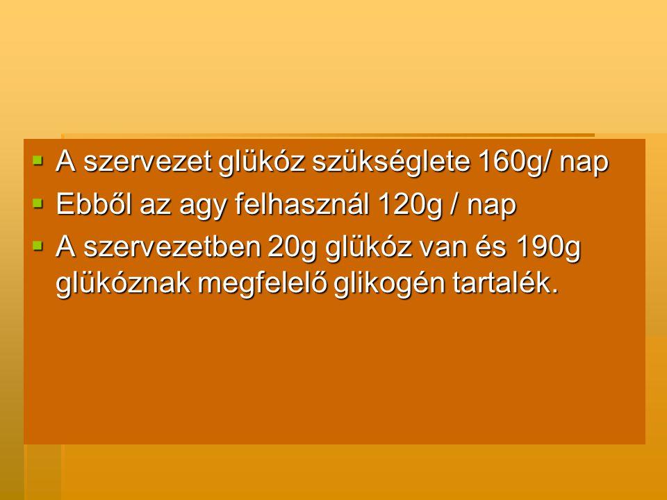 A szervezet glükóz szükséglete 160g/ nap