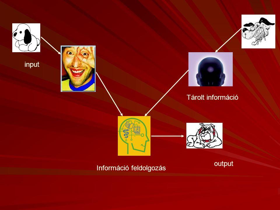 Információ feldolgozás