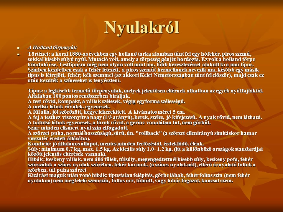 Nyulakról A Holland törpenyúl: