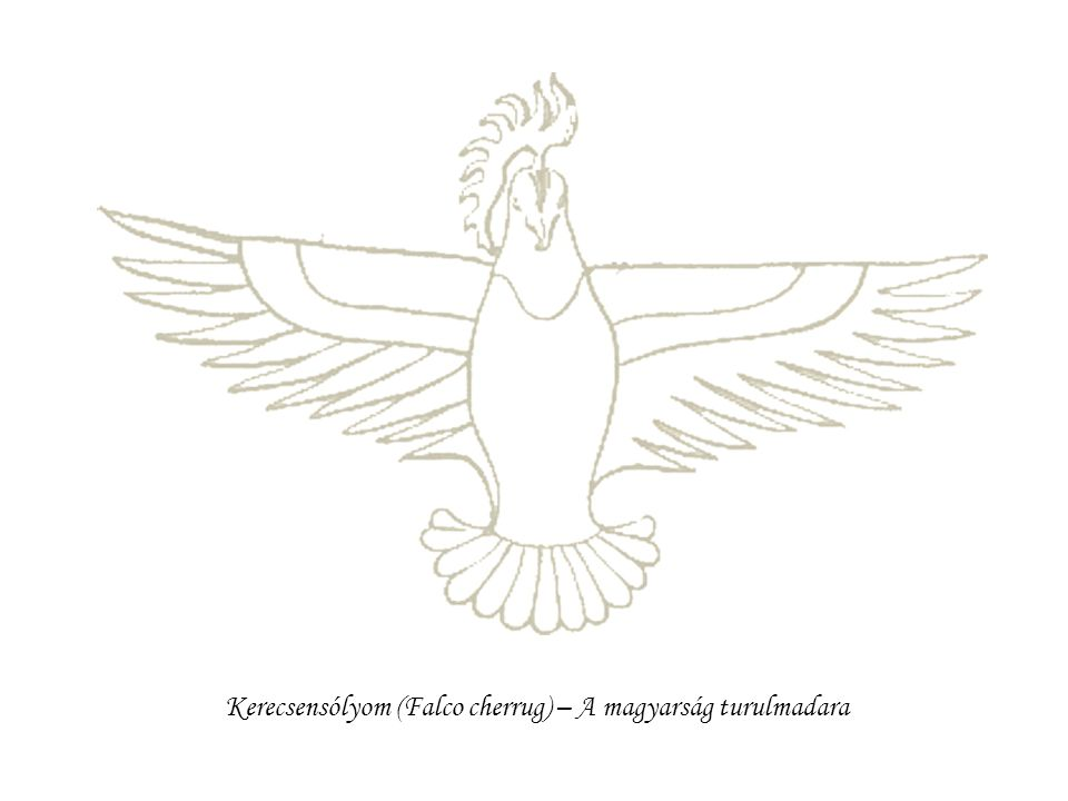 Kerecsensólyom (Falco cherrug) – A magyarság turulmadara