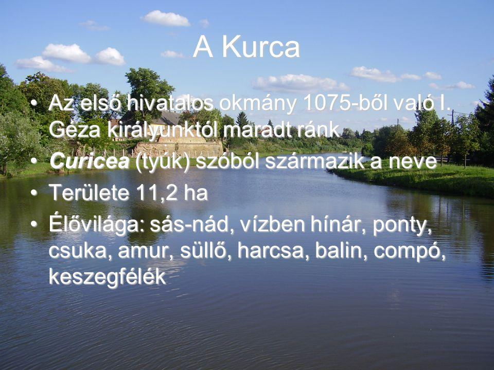 A Kurca Az első hivatalos okmány 1075-ből való I. Géza királyunktól maradt ránk. Curicea (tyúk) szóból származik a neve.