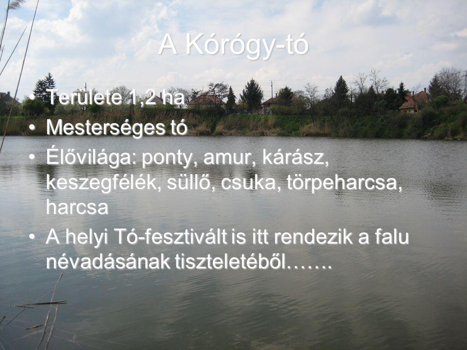 A Kórógy-tó Területe 1,2 ha Mesterséges tó