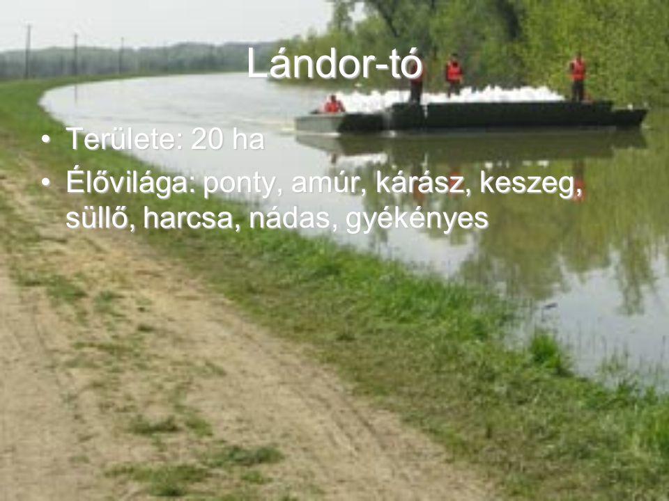 Lándor-tó Területe: 20 ha