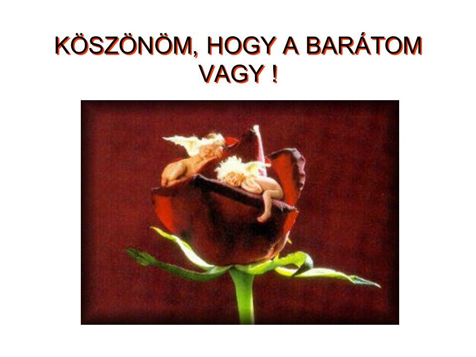 KÖSZÖNÖM, HOGY A BARÁTOM VAGY !